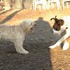 Bixby (puppy), Travis_00003