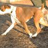 Bixby (puppy), Travis_00005