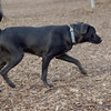 Black dog_00001