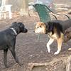 black dog, lucy, maddie_00001