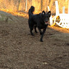BUDDY ( new, young)_00006