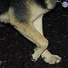 legs cover