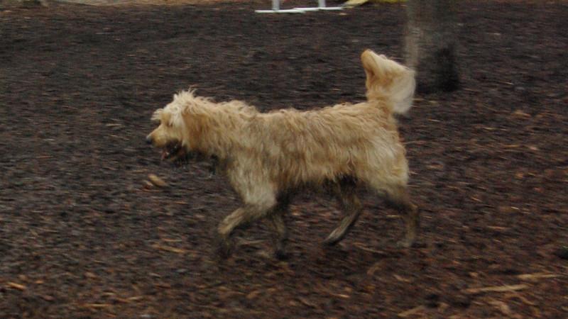 OLLIE ( mud )
