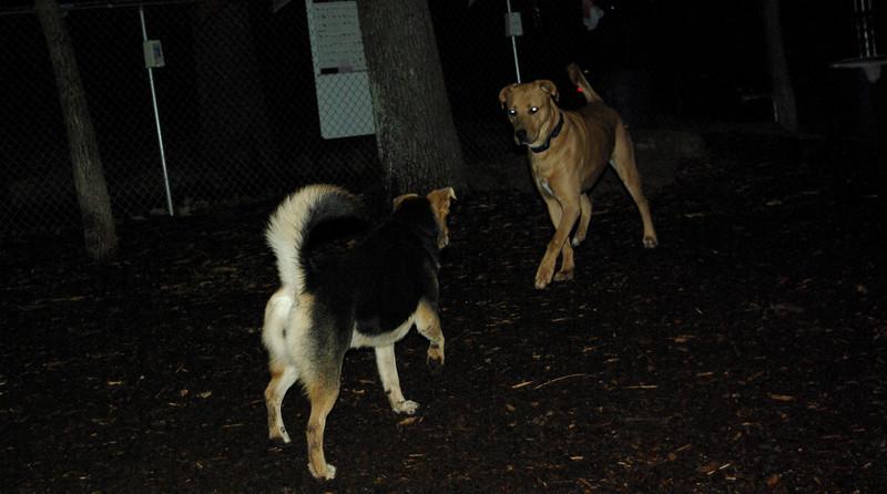 dutch & maddie (dutch enters)