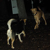 dutch & maddie (dutch enters)