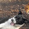 CHLOE (b&w) & CHLOE (basenji pup)
