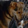 BRUISER (puppy) & MADDIE