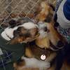 BRUISER (puppy) & MADDIE.