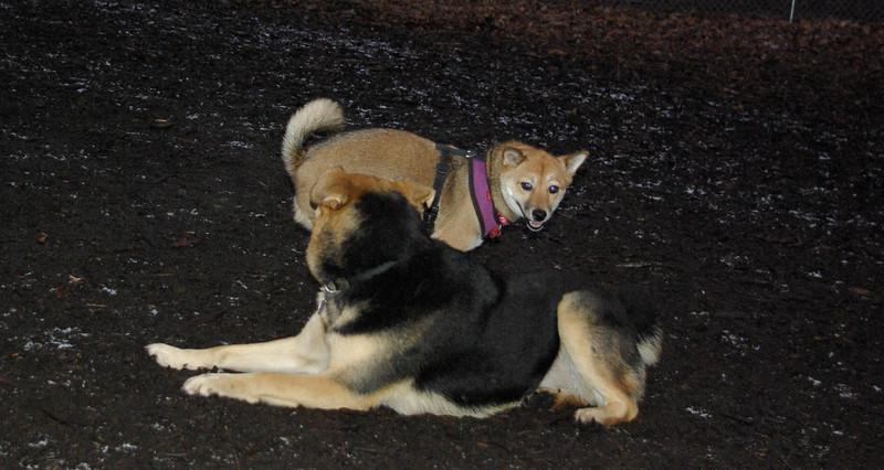 FOXI & MADDIE 3