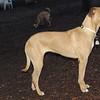 MARLEY (island dog)