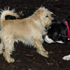 ANDY(cairn) & BUDDY (new) 3