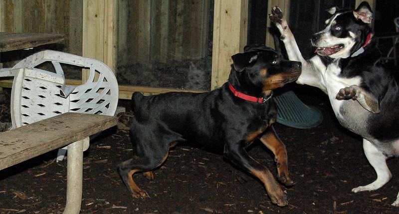 EUBIE (rottweiler pup), BUDDY (new)