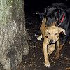 max (maxx, ridgeback pup) , eubie