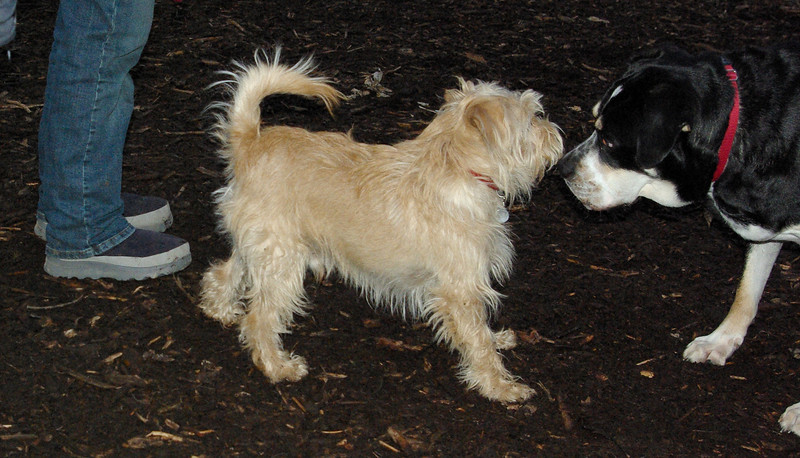ANDY(cairn) & BUDDY (new)