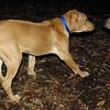max (maxx, ridgeback pup) , Monty.