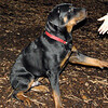 EUBIE (rottweiler pup) shake