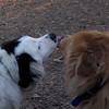 MARLEY (boy pup) & Zim (zimm)