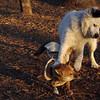 MARLEY (boy pup) & FOXI 4