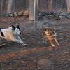 MARLEY (boy pup) & FOXI.