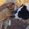 MARLEY (boy pup) & FOXI 3