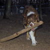 BAXTER (big stick)