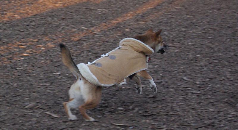 FOXI (coat)