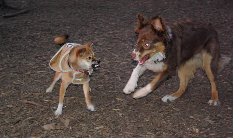 FOXI & BAXTER 3