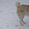 JUNO (2yr. 1st snow)