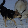 MADDIE & JUNO (from california, 1st snow)
