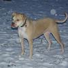 LUCY (pitbull, snow)