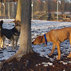 MADDIE & MAX (puppy) 3.
