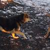 MADDIE & MAX (puppy)