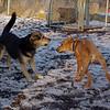 MADDIE & MAX (puppy) 2.