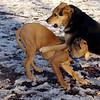 MADDIE & MAX (puppy) 5