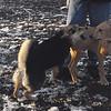 MADDIE & MAX (puppy) 4