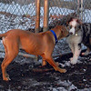 MAX (puppy), Maia OR Maverick 2