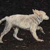 BARNEY (mud pup)