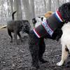 JET & BARNEY (new pup) 3