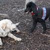 JET & BARNEY (new pup) 6