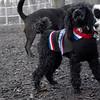 JET & BARNEY (new pup) 2
