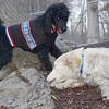 JET & BARNEY (new pup) 5