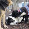 MARLEY (boy pup) & Jet.