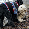 JET & BARNEY (new pup) 14