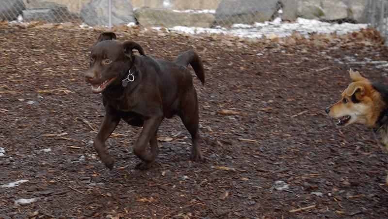 CHIEF (lab pup) & MADDIE