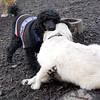 JET & BARNEY (new pup)