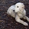 BARNEY (mud pup) 2