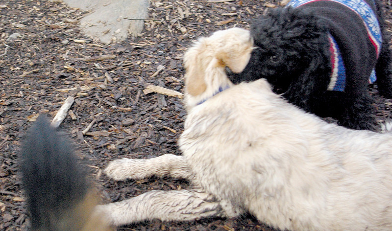 JET & BARNEY (new pup) 10