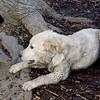BARNEY (new pup).