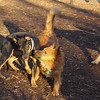 DIVA (puppy), MIJO, Robin.