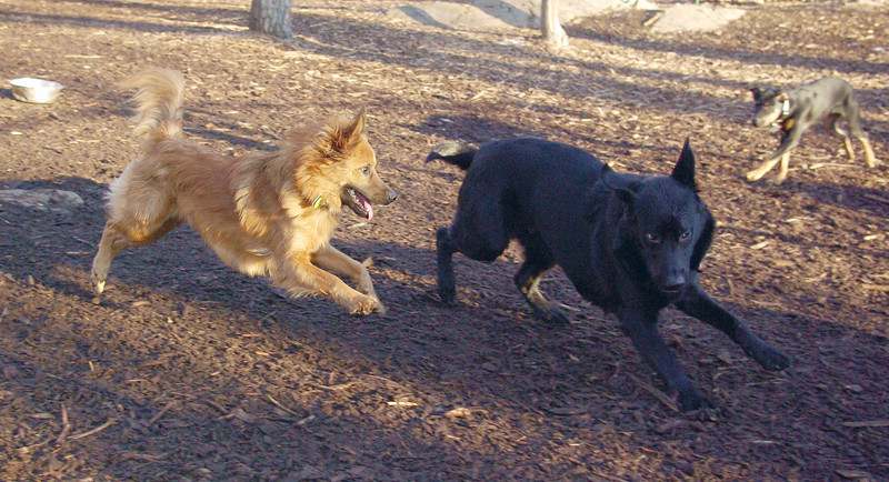 MIJO & HARVEY (wendy, guide pup)